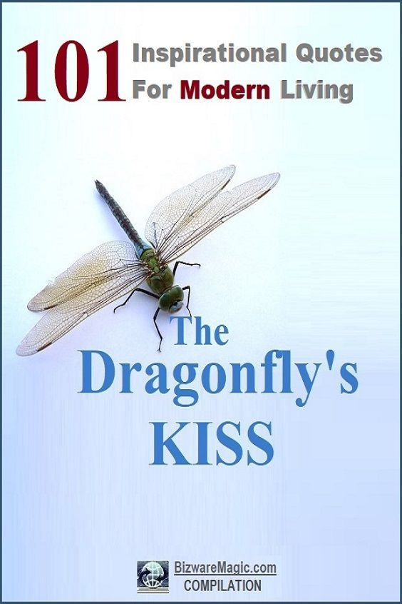 The Dragonfly's KISS
